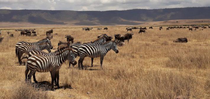 Safari nejen v Serengeti