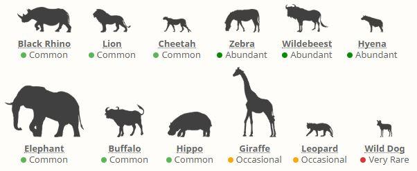 Zvířata v parku Ngorongoro