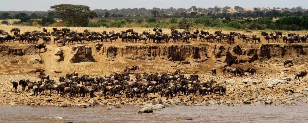 Velká migrace - překonávání řeky Mara v severním Serengeti