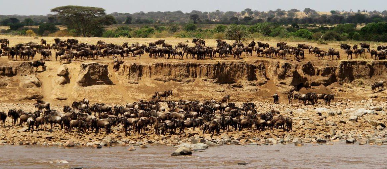 Překonávání řeky Mara v severním Serengeti