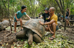 Želvy na ostrově Changduu