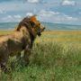 Safari v Serengeti