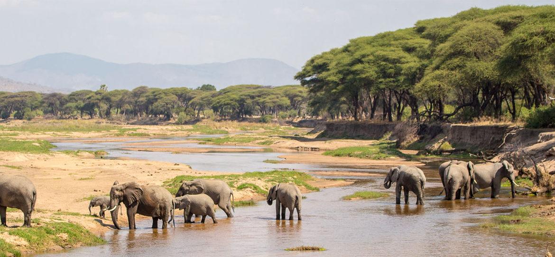 Národní park Ruaha