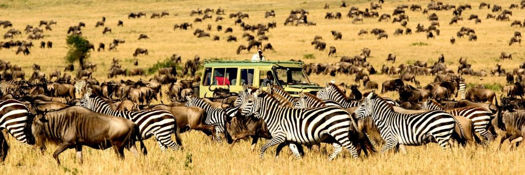 Safari autem za Velkou migrací v Serengeti