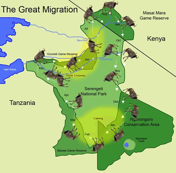 Velká migrace v národním parku Serengeti