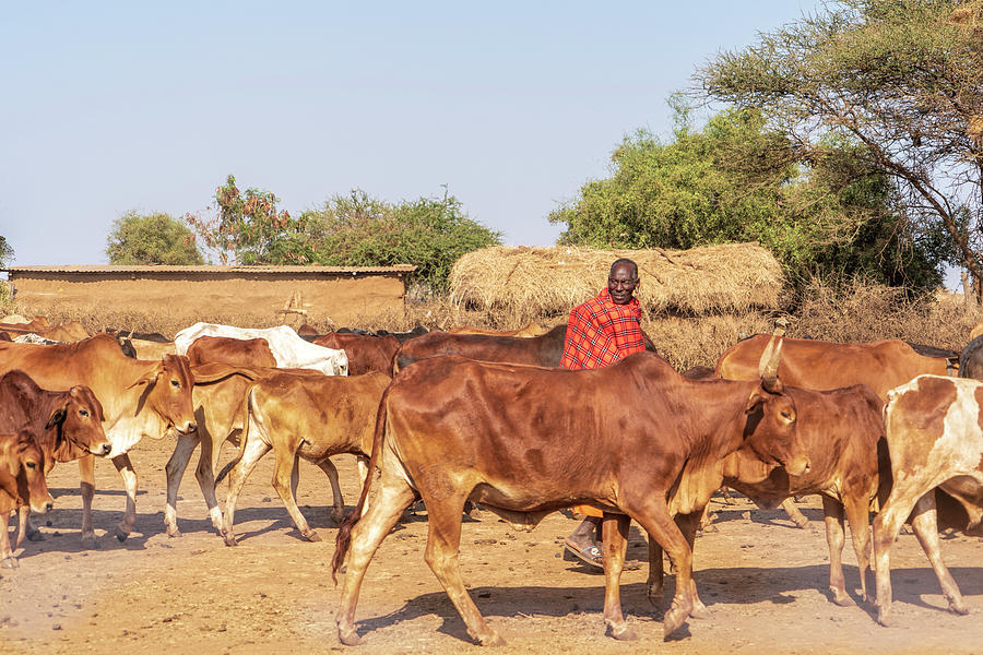Masajové v Tanzanii