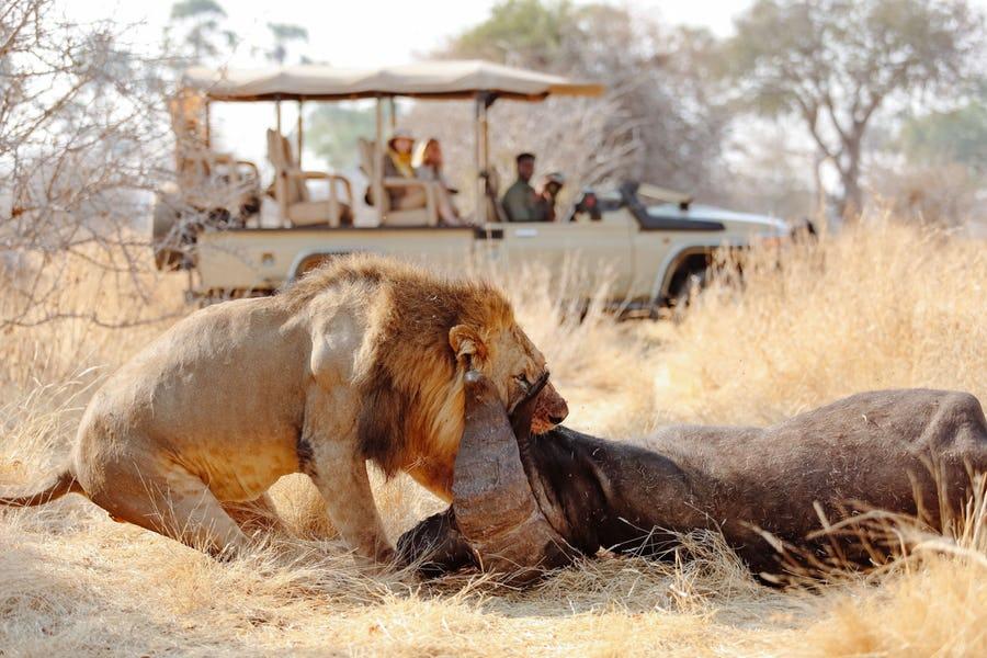 Safari národní park Ruaha