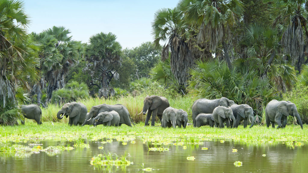 Stádo slonů - rezervace Selous