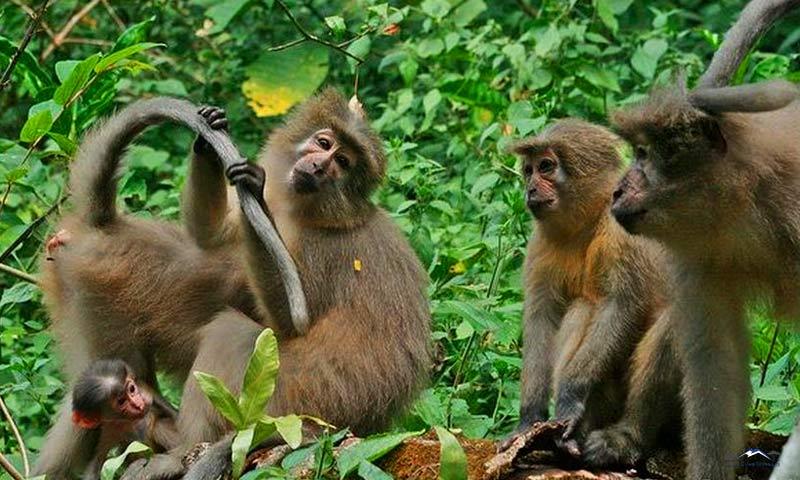 Národní park Udzungwa Mountains je domovem řady primátů