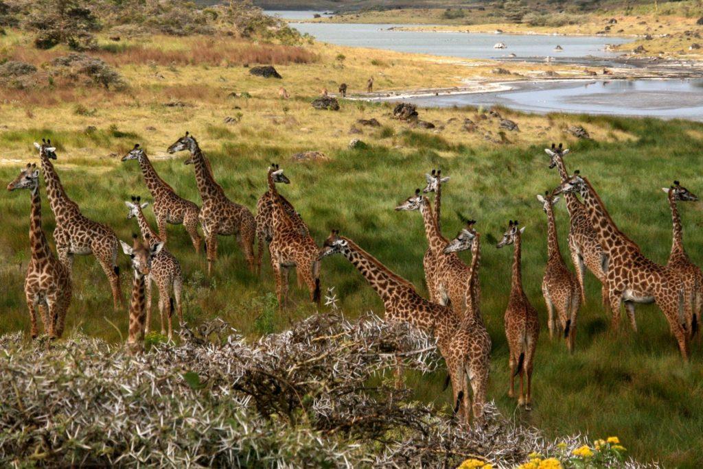 Momella Lakes v národním parku Arusha